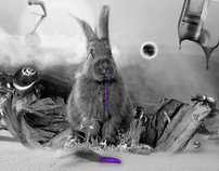 Rabbit on drugs