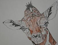 The Giraffe Study by Melissa J Aguiar