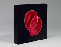 Peter Gabriel 'Scratch My Back' Collectors Edition