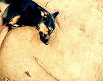 Fotografía Animal II