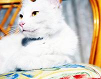 EFES // Turkish Cat from Van