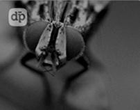 Fotografia - Macro Bugs