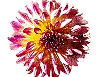 Awareness Campaign - Flores