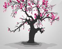 Sakura - Japanese flowering cherry blossom