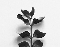 A Collection of Dancing Leaves