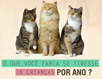 Cats Spay/Neuter Project