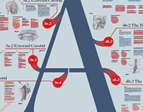 The Arteries System