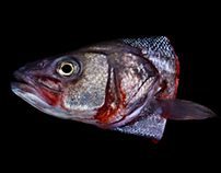CUT – E ANIMALS / Fish