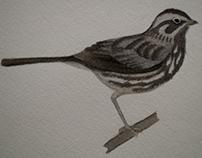 James H. Barrow FS Bird Guide