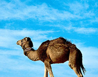 Camel solar Web banners design