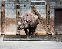 A Zoo Life