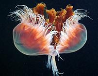 Jellyfish Madness