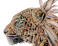Leopard Color Pencil Drawing