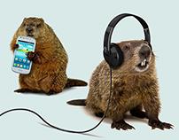 U.S. Cellular - Groundhog Day