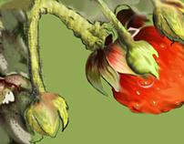 Patient Strawberries