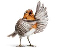 OPERA BIRDS