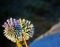 Photography(Perfection) (الفوتوغرافيا(الكَمال