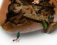 Encyclopedia of Life: The Ants