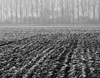 Lost in the Fields