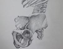 Anatomy Studies - FBAUL2012/2013