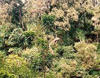 MAUI | In the jungle