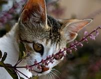 Animal Focus