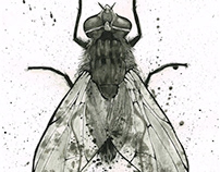 Fly: An Ink Study