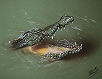 Drawing a crocodile
