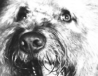 mascotas.retrato
