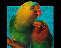 Conure Times Two