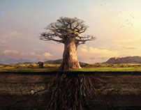 Engen Baobab Print Ad