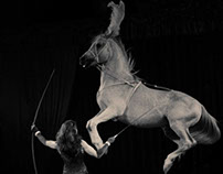 Circus (pegasus, the flyng horse)
