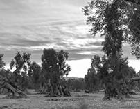 Living Trees