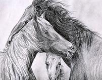 Family horses