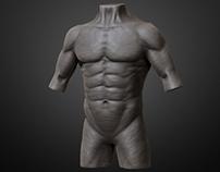Anatomy Work