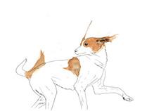 CÃES (dogs)