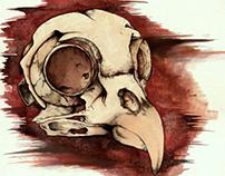 Osteology of an Animal