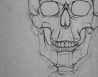 Skeleton studies