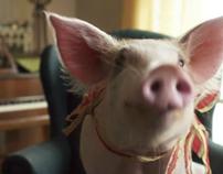 """Pig.com - """"House Pig"""" & """"Feed the Pig"""""""