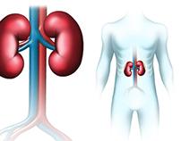 Medical illustration, Sanofi Aventis