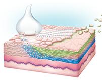 Medical illustration, Coria Laboratories