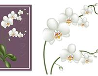 Botanical illustration, Bath Botanica