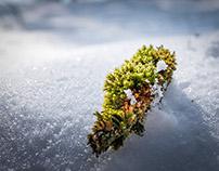 snowice