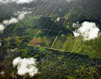 Sabah Palm Oil Fields
