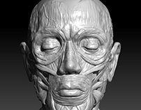 Facial Anatomy Sculpt