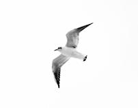 Bird Atlas (non-commercial)