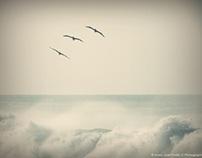 Sea, The beautiful Sea