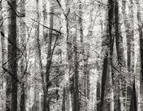 100 trees