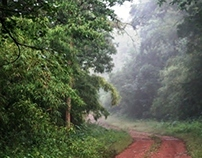 Central India - Country-sides & Forests