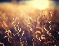 Nature Details Tan/Light